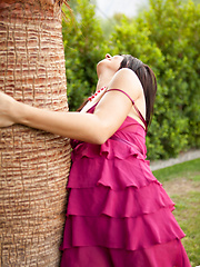 Palm Tree - Pics